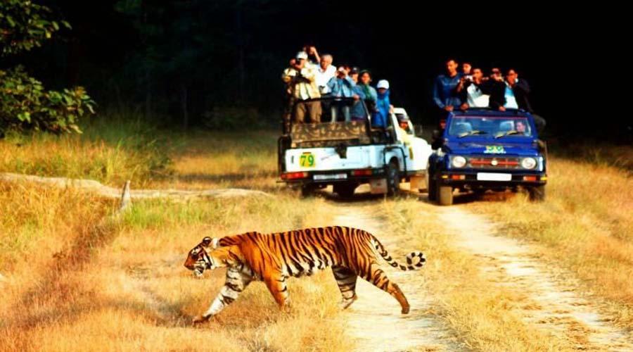 Spotting Wildlife
